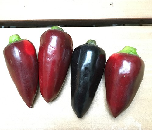 Black and red chili scoville