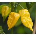 Habanero Lemon