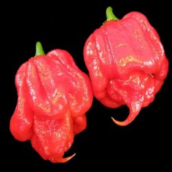 Trinidad Scorpion Red